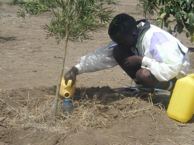 Tree nursery operation and tree seedling caring (drip irrigation).